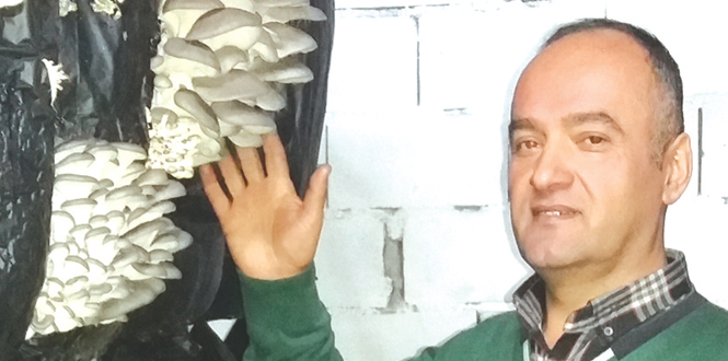 Tavuk çiftliğini Mantar çiftliğine dönüştürdü