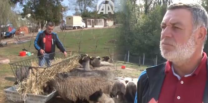 Suat Karakaş, Romanov koyunları ile AA'ya haber oldu...
