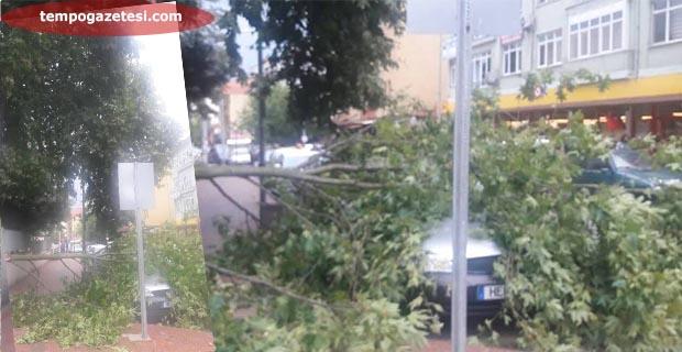 Fırtına ağaçları devirdi. Ölümden kurtuldular!...