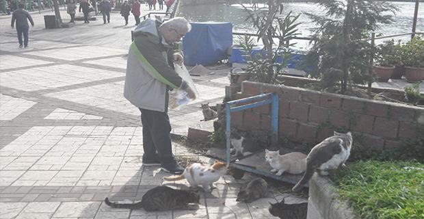 Emekli maaşıyla hem evine hem de sokak kedilerine bakıyor