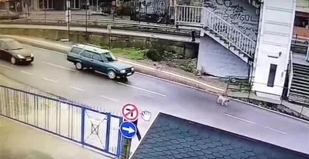 Köpeği ezip kaçan zanlı yakalandı