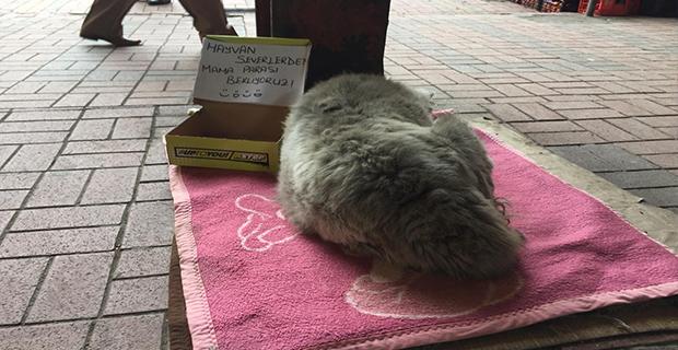 Sokak hayvanları için karton kutudan kumbara...