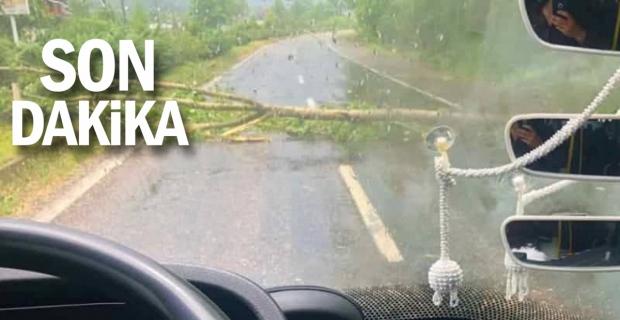 Çıkan fırtınada ağaçlar yerinden söküldü