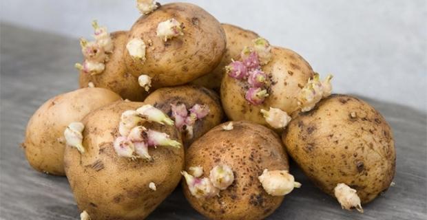 Patatese dikkat!...