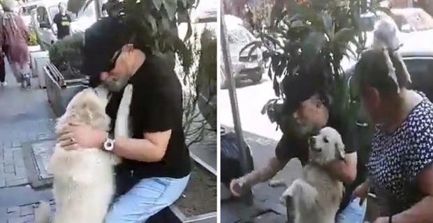 Kayıp köpek sahibini karşısında görünce...