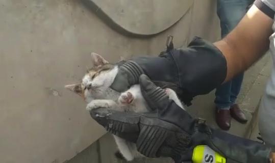 Yavru kediyi kurtarma operasyonu