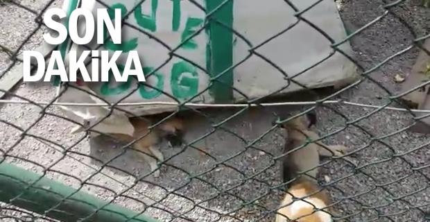 Barınak taşındı, hayvanlar unutuldu: Bir günde 4 yavru köpek öldü