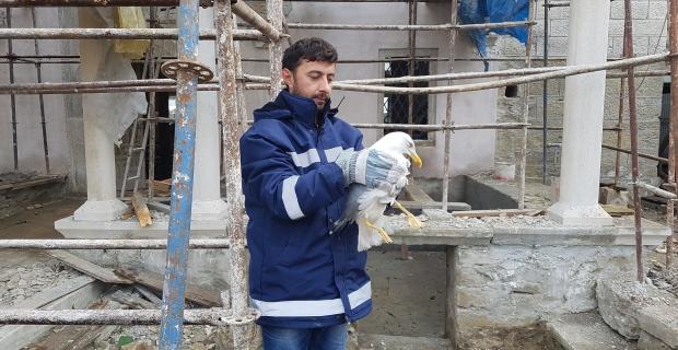 Cami avlusunda mahsur kalan martıya belediye görevlileri sahip çıktı