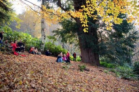 Dünyanın en yaşlı 5'inci ağacının sonbahar güzelliği