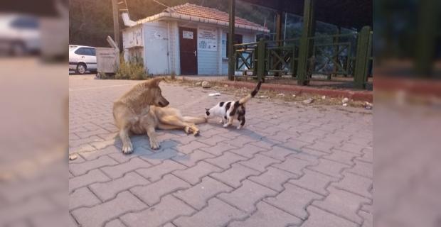 Köpek ve kedinin dostluğu