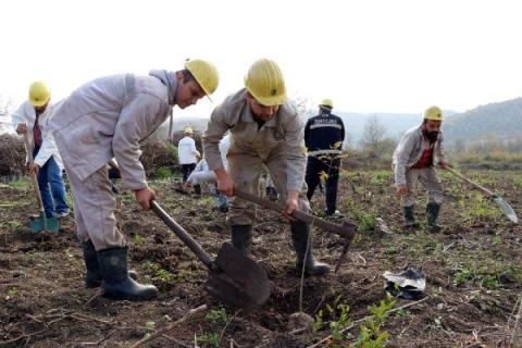 Maden işçileri fidan dikti