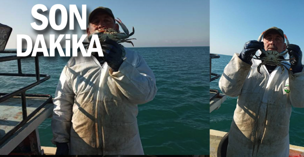 Karadeniz'de nadir görülen mavi yengeç ağlara takıldı