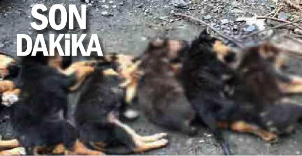 Yavru köpeklerin zehirlenerek öldürüldükleri iddiası