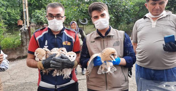 Bir aydır banyo boşluğunda kalan yavru baykuşlar kurtarıldı