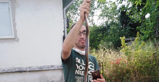 Kümesine giren 1,5 metrelik yılanı elleriyle yakaladı
