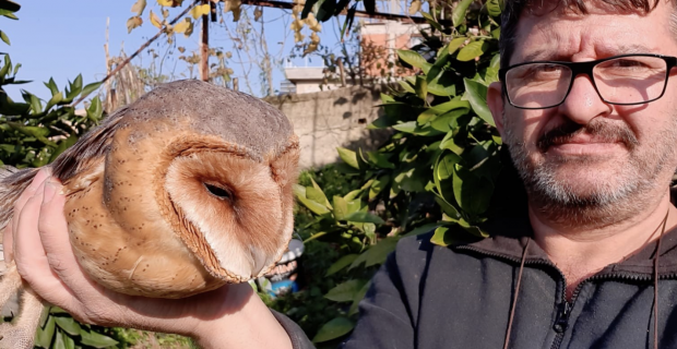 Asansör boşluğuna düşen peçeli baykuşu tedavi ediyor