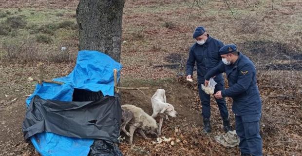 Donmak üzere olan köpeklerin imdadına Jandarma yetişti