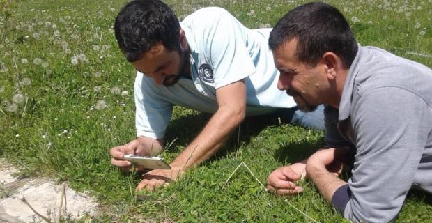 Zonguldak'ta yeni bir tür keşfedildi
