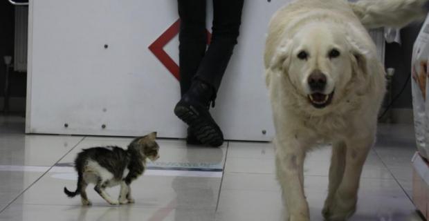 Evcil hayvanlar için mikroçip zorunlu oldu