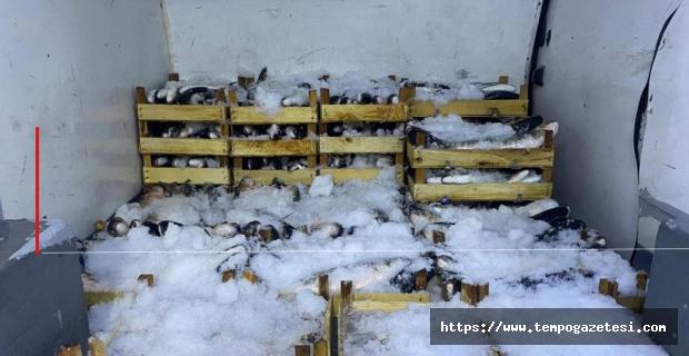 60 Kasa kefal ve barbun yakalandı...