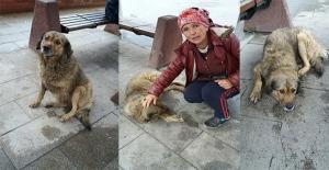 """""""Zonguldak'ın hayvan sevgisi yok"""""""