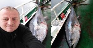 Zonguldak'ta 2 buçuk metrelik orkinos balığı yakalandı...