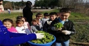 Minikler ürettikleri sebzeleri topladı