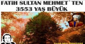 Bu ağaç, Fatih Sultan Mehmet'ten büyük