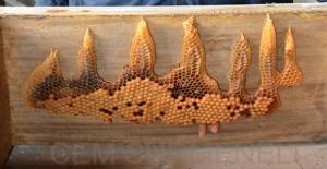 Bal arıları yazdı