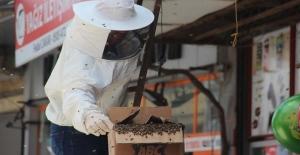 Arılar ilçe merkezine girdi, esnaf kepenk kapattı
