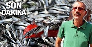 Balıkçılar HAMSİ'den umutsuz