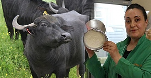 Perihan Abla, Hafize Ana... Manda yoğurduna inek sütü kattılar!