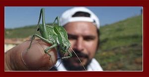 Bilim insanları uyarıyor: 'Böcek istilasına uğrayabiliriz'