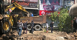 Devrilen çınar ağacının yerine yenisi dikildi