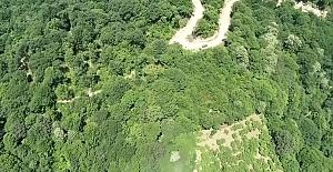 Köknar ağaçlarını komandolar koruyacak