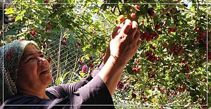 Bozkurt, Dünya Çiftçiler Gününü kutladı