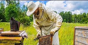 Arıcılık % 50, Kaz ve Hindi yetiştiriciliğine % 75 hibe desteği geliyor
