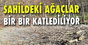 Sahildeki ağaçlar bir bir katlediliyor: İnşaat alanı mı açılıyor?
