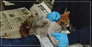 Jandarma yaralı kediye sahip çıktı