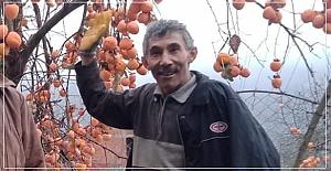 Orman işçisi hayatını kaybetti