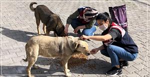 Sokak hayvanlarını unutmadılar