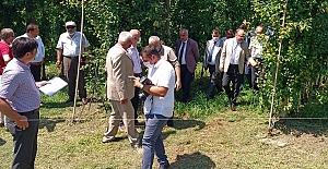 Çaycuma da armut bahçelerini çiftçilerle gezdi