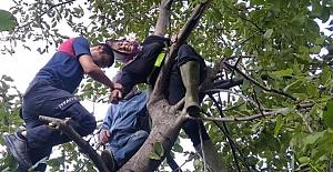 Ceviz toplamak için çıktığı ağaçta mahsur kaldı