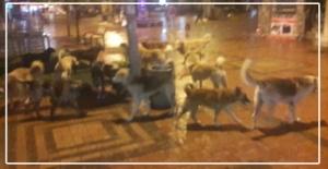 Sokak köpekleri vatandaşa saldırdı...
